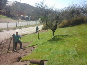 colocación de cesped previa nivelación de terreno