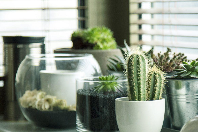 Plantas para interiores vivero arg ello for Abono para plantas de interior